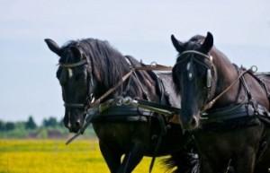 Ярославский конно-каретный двор